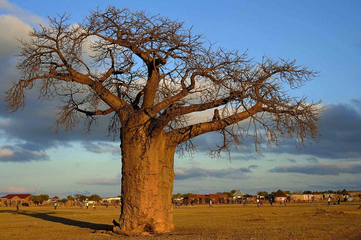 El Baobab de los sueños, un proyecto de sensibilización de AsturiesxÁfrica ONG